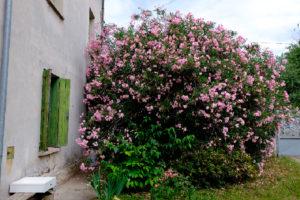 Laura Hirennau giardino